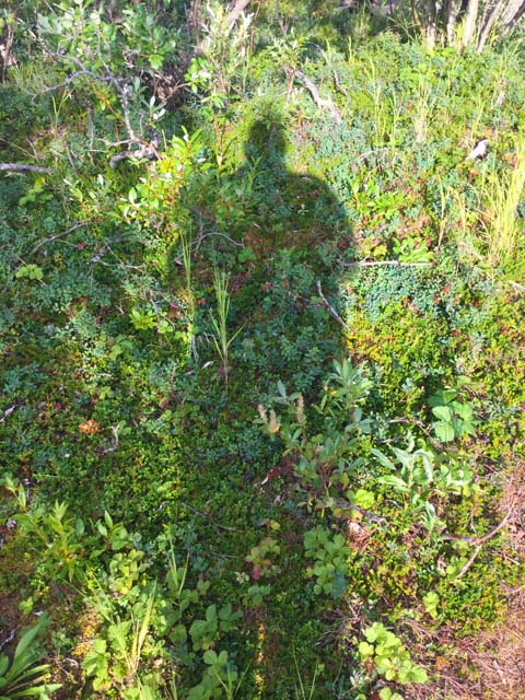 Alaska Bush Shadow