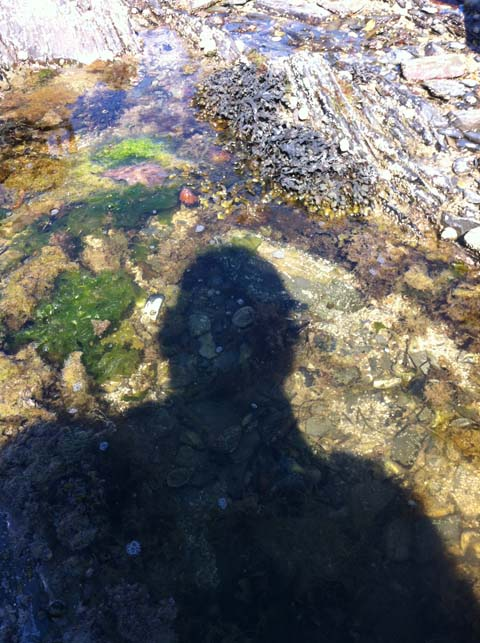Cornwall Rockpool Shadow